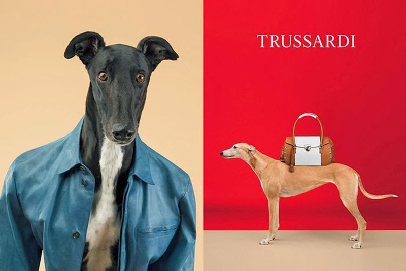 If It's Hip, It's Here (Archives): William Wegman Trades ...