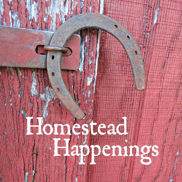 What's new on my homestead.
