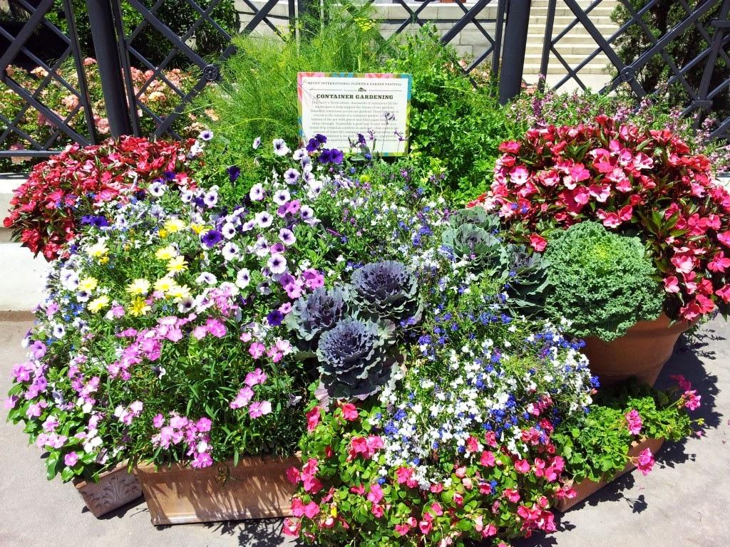 Judi's Green Thumb Growing: Container Gardening