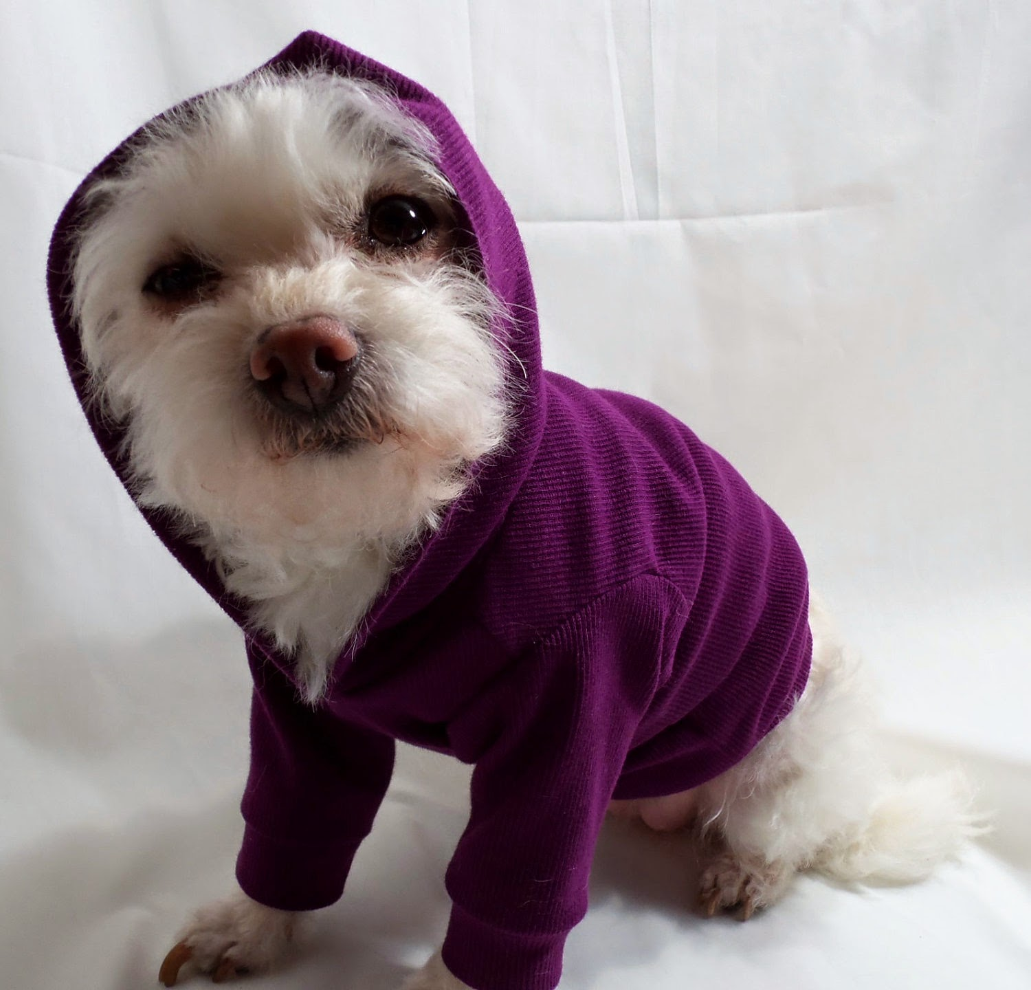 Rules of the Jungle: Best dog sweater for the winter
