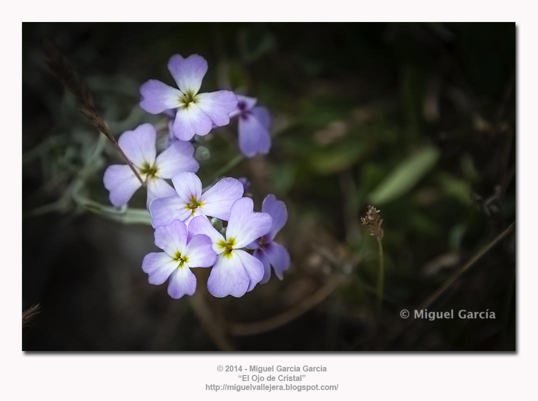 Flora dunar.