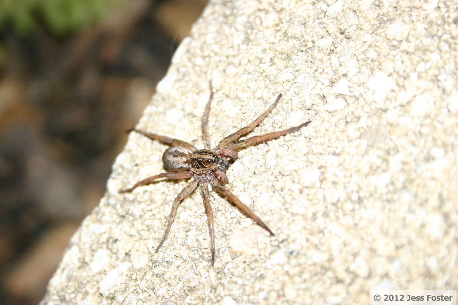 and the flash on my camera a wolf spider s eyes reflect light well