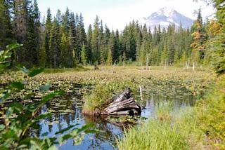 Trillium Lake Oregon USA