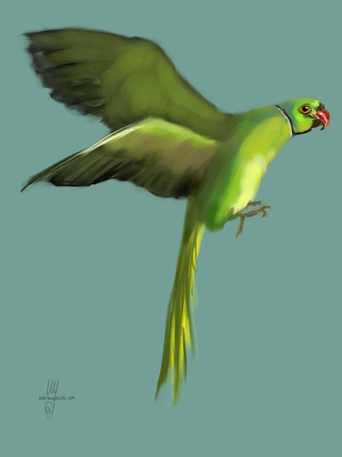 Ring-necked parakeet bird painting by Artmagenta