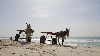 Mauritania has lots of donkeys for work