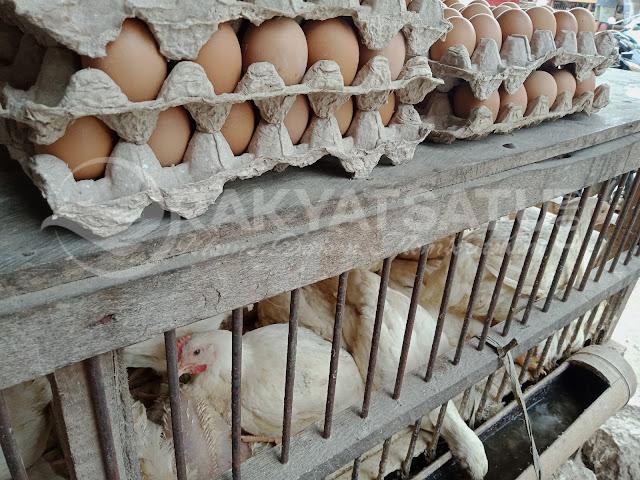 Hati-hati, Tidak Menutup Kemungkinan Telur Palsu Beredar di Toraja