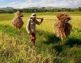 Puluhan Ribu Penyuluh Pertanian Minta Diangkat Jadi PNS