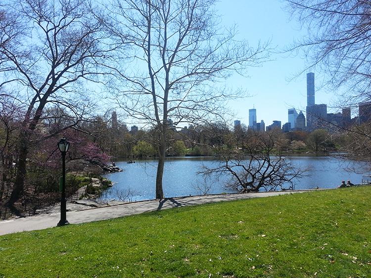 Central Park et vue sur la ville