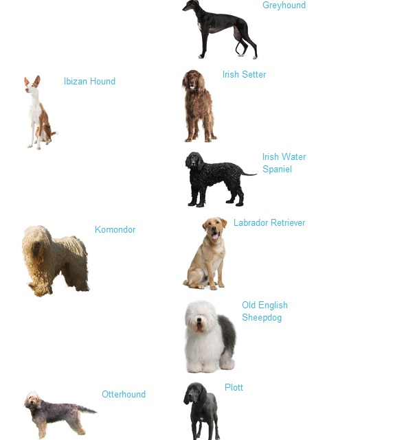 Types of dogs with pictures and information