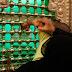 El imamato tiene alguna base solida en el Corán?