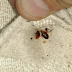 Your Bed Is Filled With Lung-Harming Bugs. Here's How To Eliminate Them Quickly!