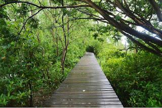 Mangrove surabaya wanorejo