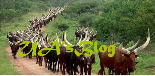 How Rampaging Fulani Herdsmen Chased Out Ondo LG Worker This Morning, Took Over Secretariat