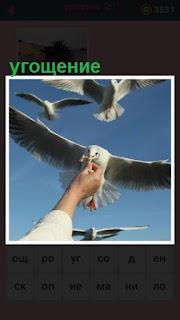 происходит угощение птиц на улице человеком