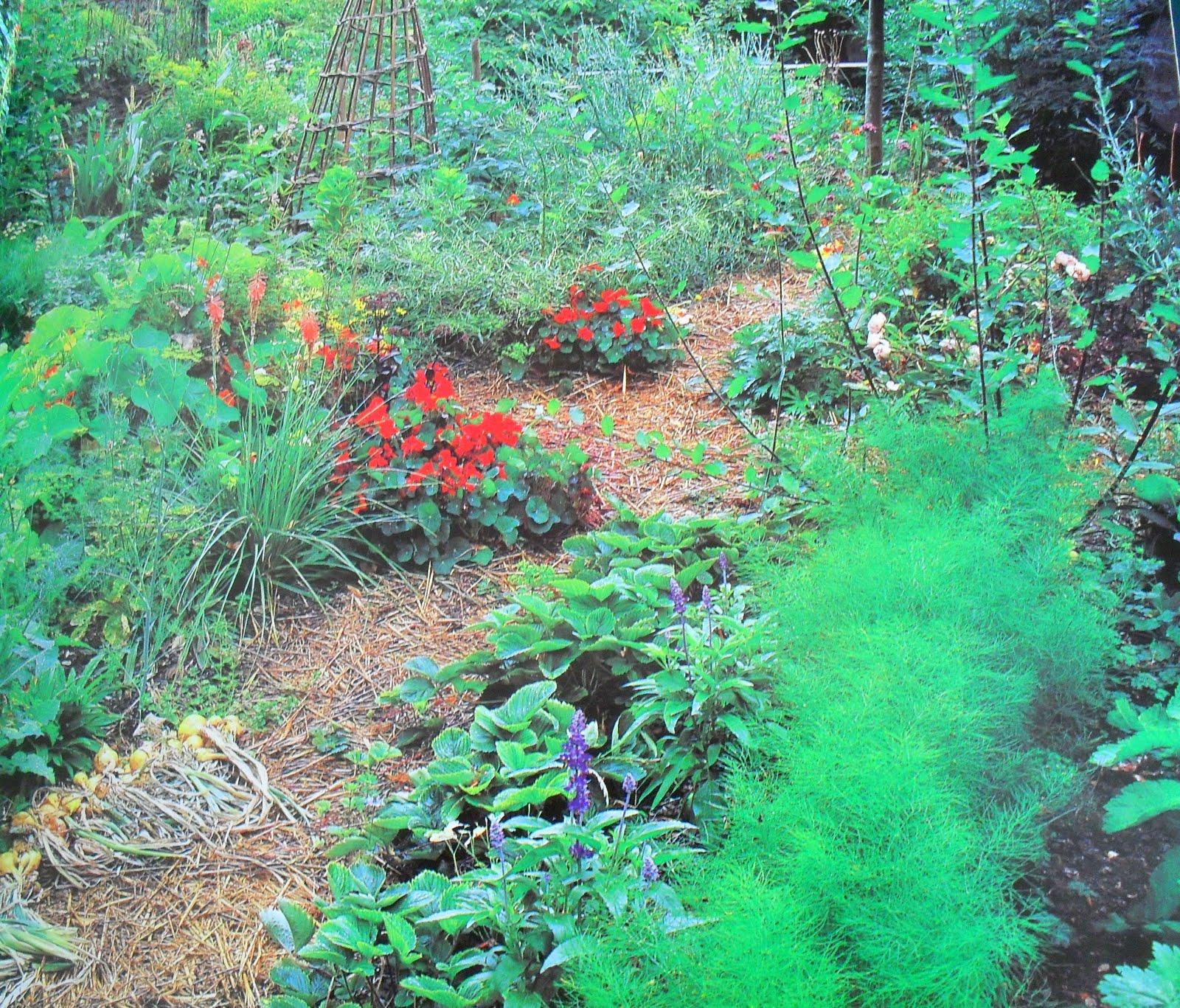 The New Kitchen Garden Anna Pavord