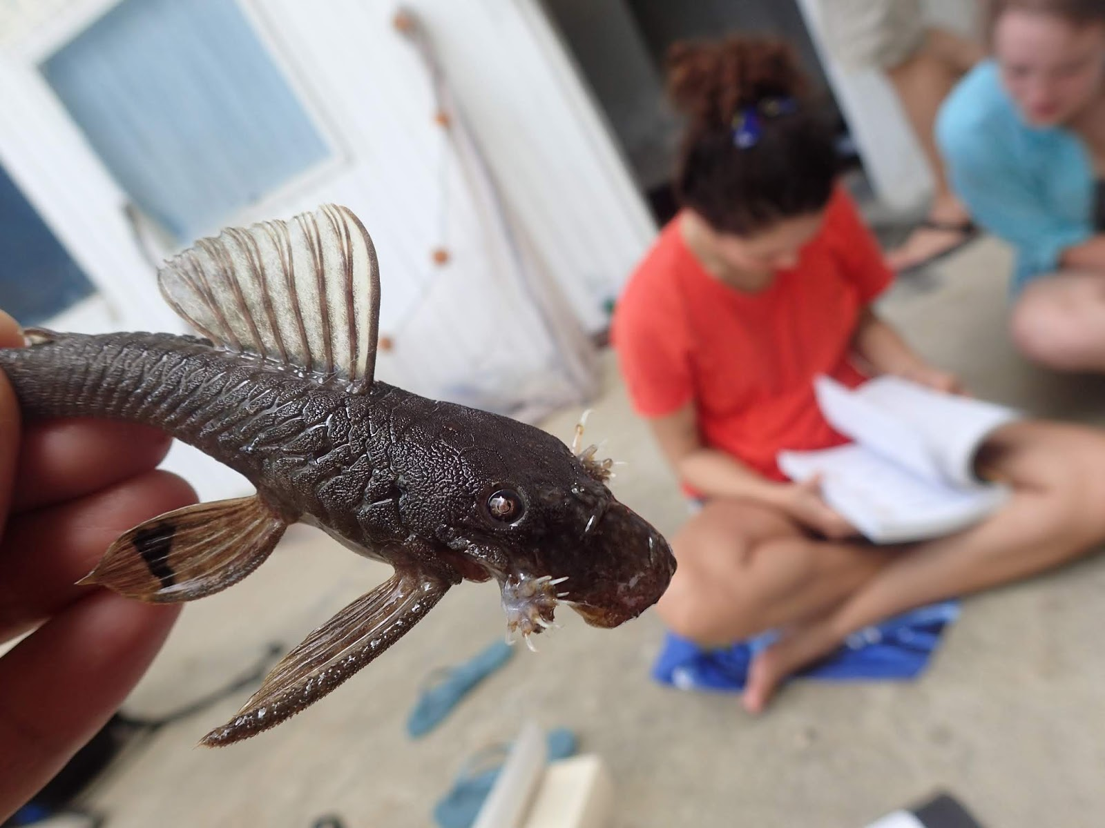 What the ichthyologist does