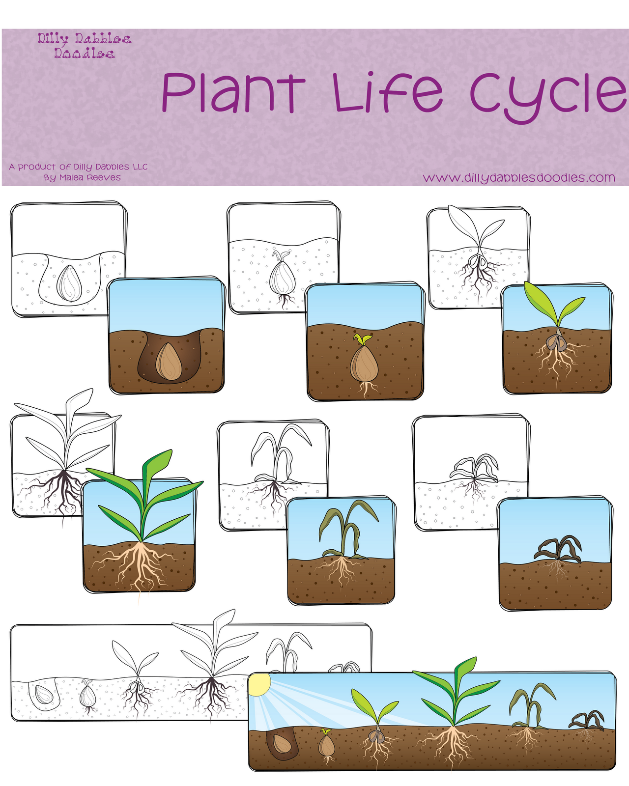 Sunflower Plant Life Cycle Diagram Banshee Engine Freebie Classroom Freebies