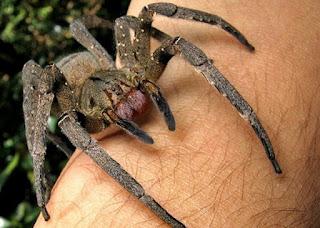 A aranha e algumas curiosidades