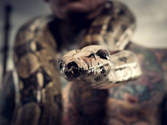 Serpientes de mascotas