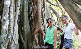 wisata pohon kiara pulau peucang
