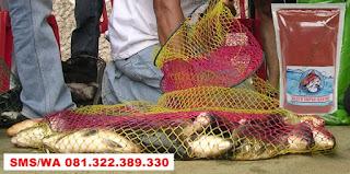 Umpan Ikan Mas Subang Khusus Kilo Gebrus