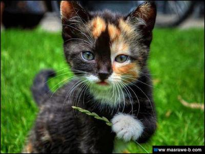 صور صور قطط كيوت 2020 خلفيات قطط جميلة جدا cats24.png