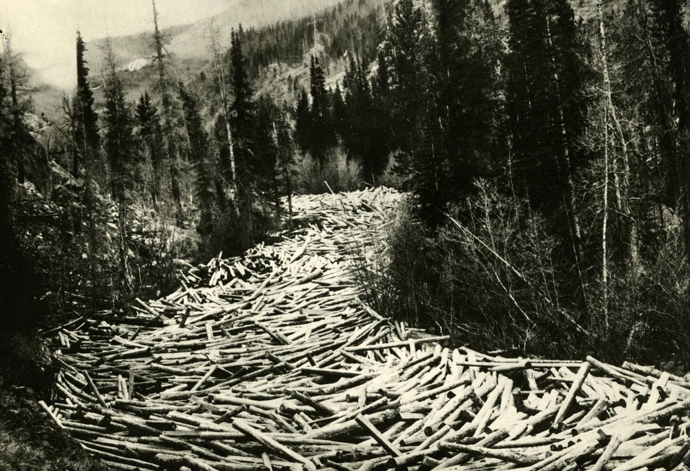 logs in British columbia