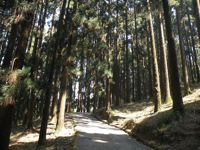 Hutan Dow Hill di India sangat angker dan menyeramkan
