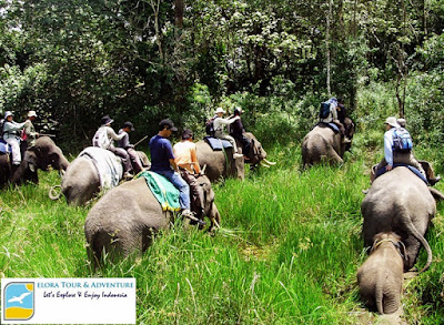 Safari Gajah Taman Nasional Way Kambas ELORA TOUR & ADVENTUSafari Gajah Taman Nasional Way Kambas ELORA TOUR & ADVENTURERE