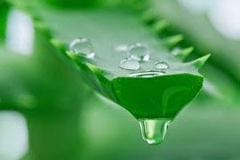 Benefits of Aloe Vera for Beauty