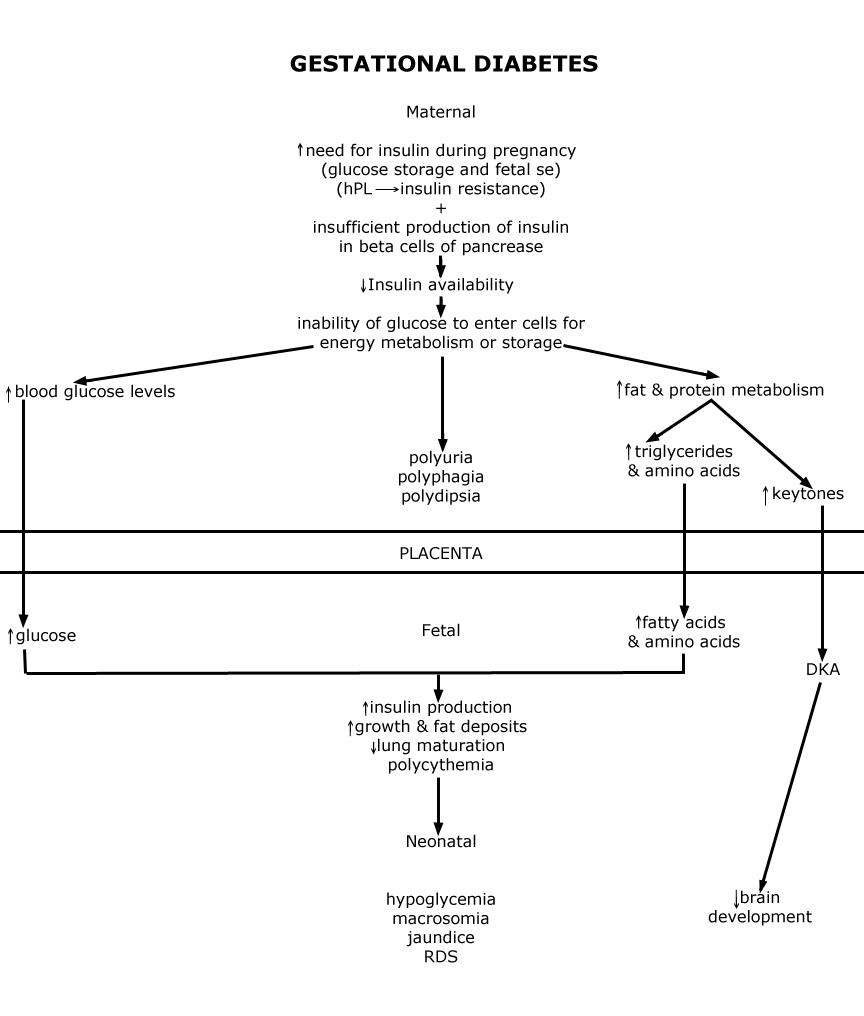Pathophysiology: Gestational Diabetes - Pathophysiology