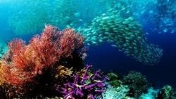 sfondi mare e pesci 18