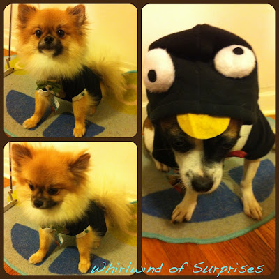 Penguins and tuxedos for dogs