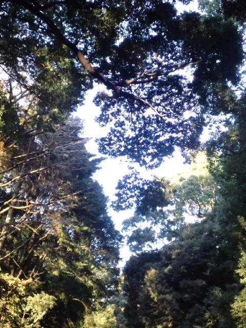 明治神宮内の景色です。