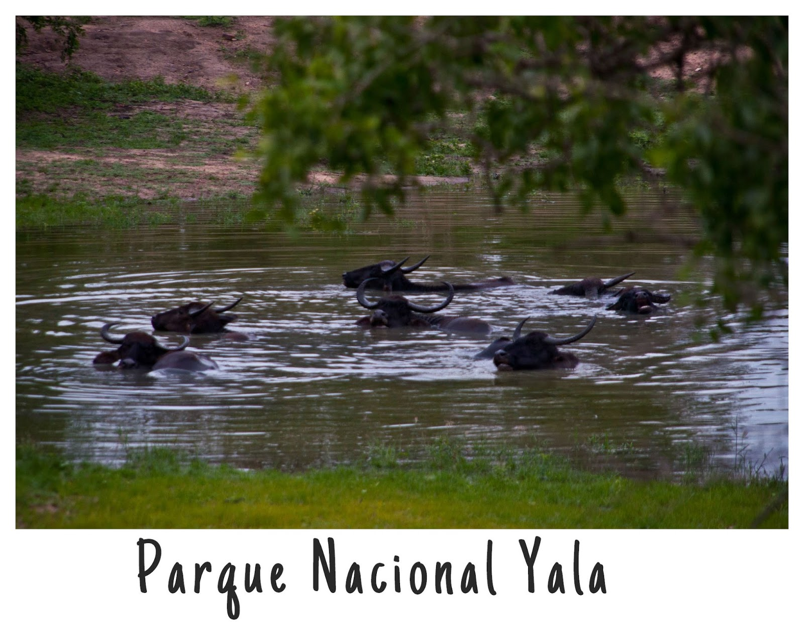 http://www.depatitasenelmundo.es/2015/01/yala-un-safari-para-principiantes.html