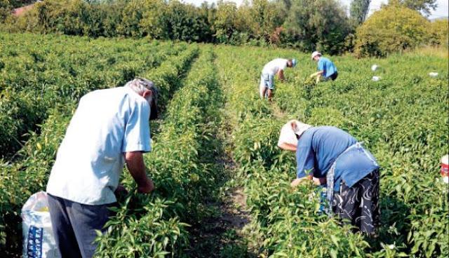 Έσπειραν το... χάος στις δηλώσεις των αγροτών