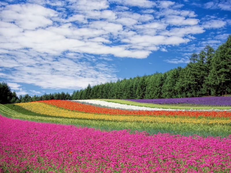 Download Red Yellow and Orange Flower Field HD wallpaper. Click Visit page Button for More Images.