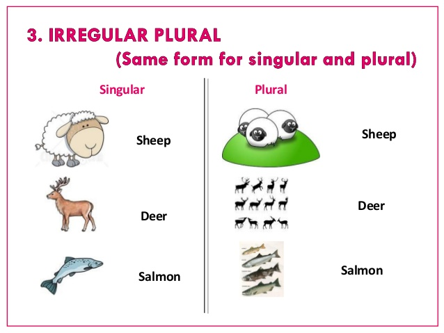Let's Learn SINGULAR and PLURAL