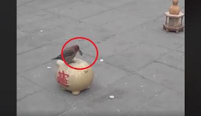 Burung Pun Pandai Menabung, Masa Kamu Enggak...