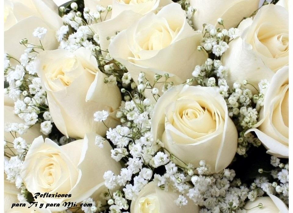 Buenos Deseos Para Ti Y Para Mi Hermosas Rosas Blancas
