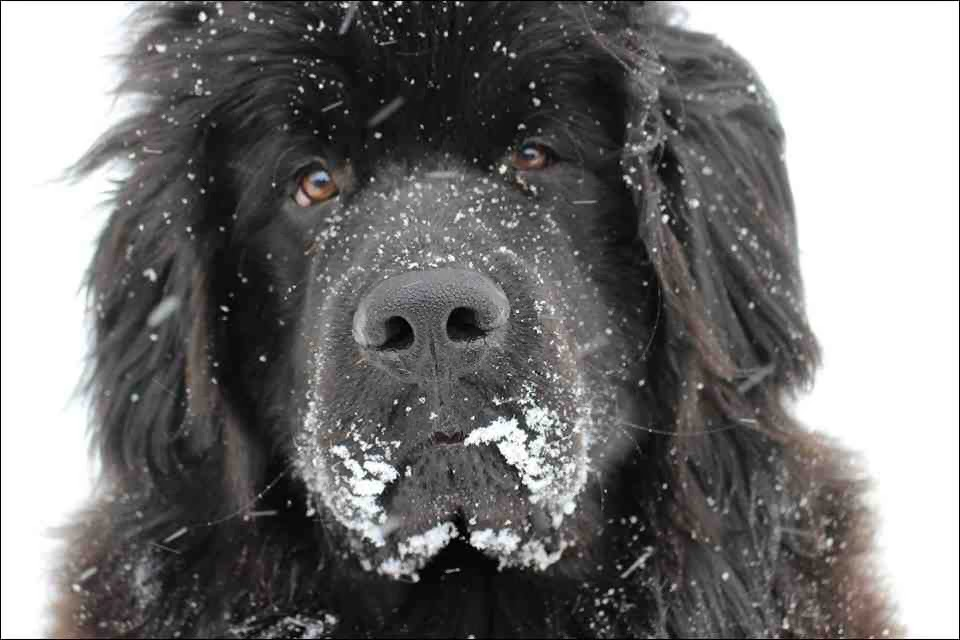 Cute dogs - part 9 (50 pics), close up picture of dog in the snow day
