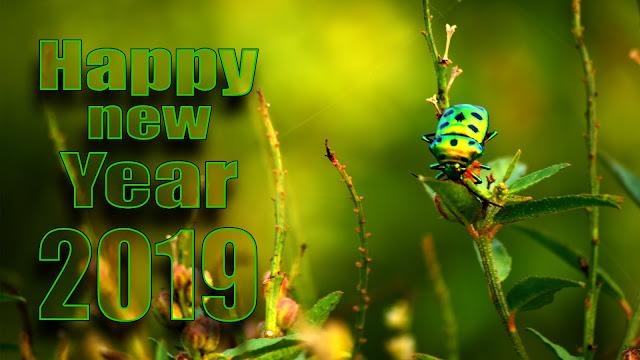 new year bhojpuri whatsapp status | Happy New Year 2019 | Happy New Year images, #aim2photography