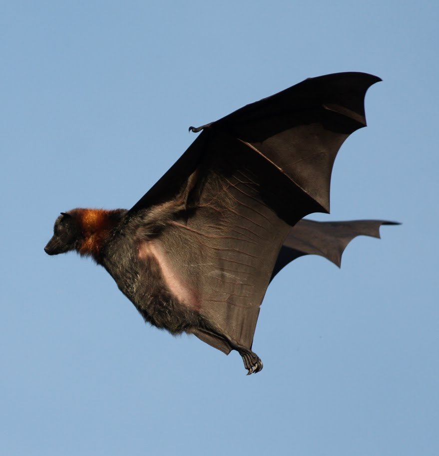 Mark James Pearson: Bits & (Mega)bats From The Botanical