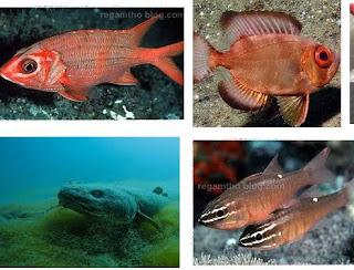 Ikan Nokturnal