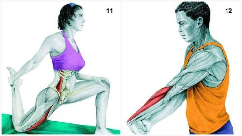 Muscles-Stretch-Exercise
