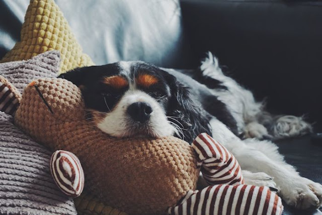 How-to-Help-Your-Dog-Ward-Off-the-Canine-Flu