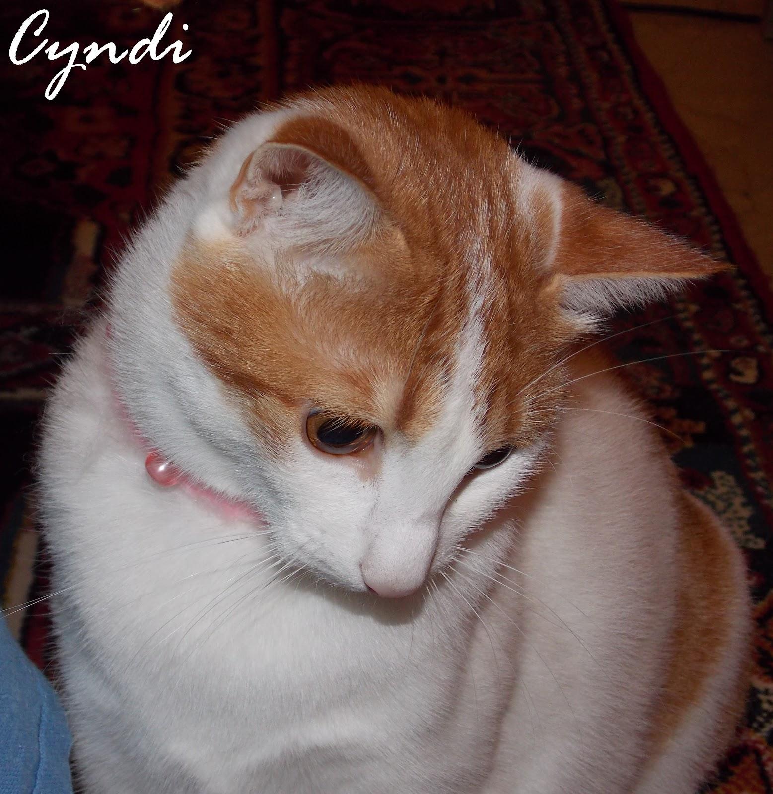 2827d97a1961 you make my day!!!  Γάτα και η φροντίδα - όλα όσα πρέπει να ξέρουμε