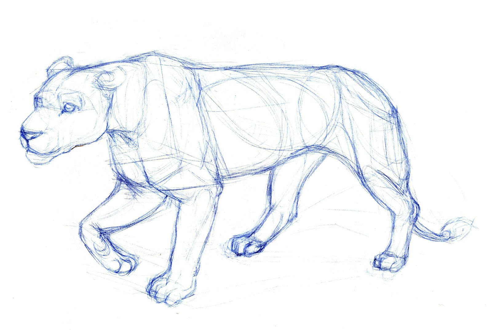 Art Kimistry: Animal Drawings