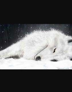 صور ذئاب , صور ذئب مكتوب عليها كلام