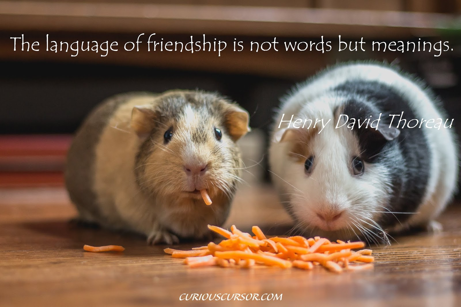 friendship quotes best